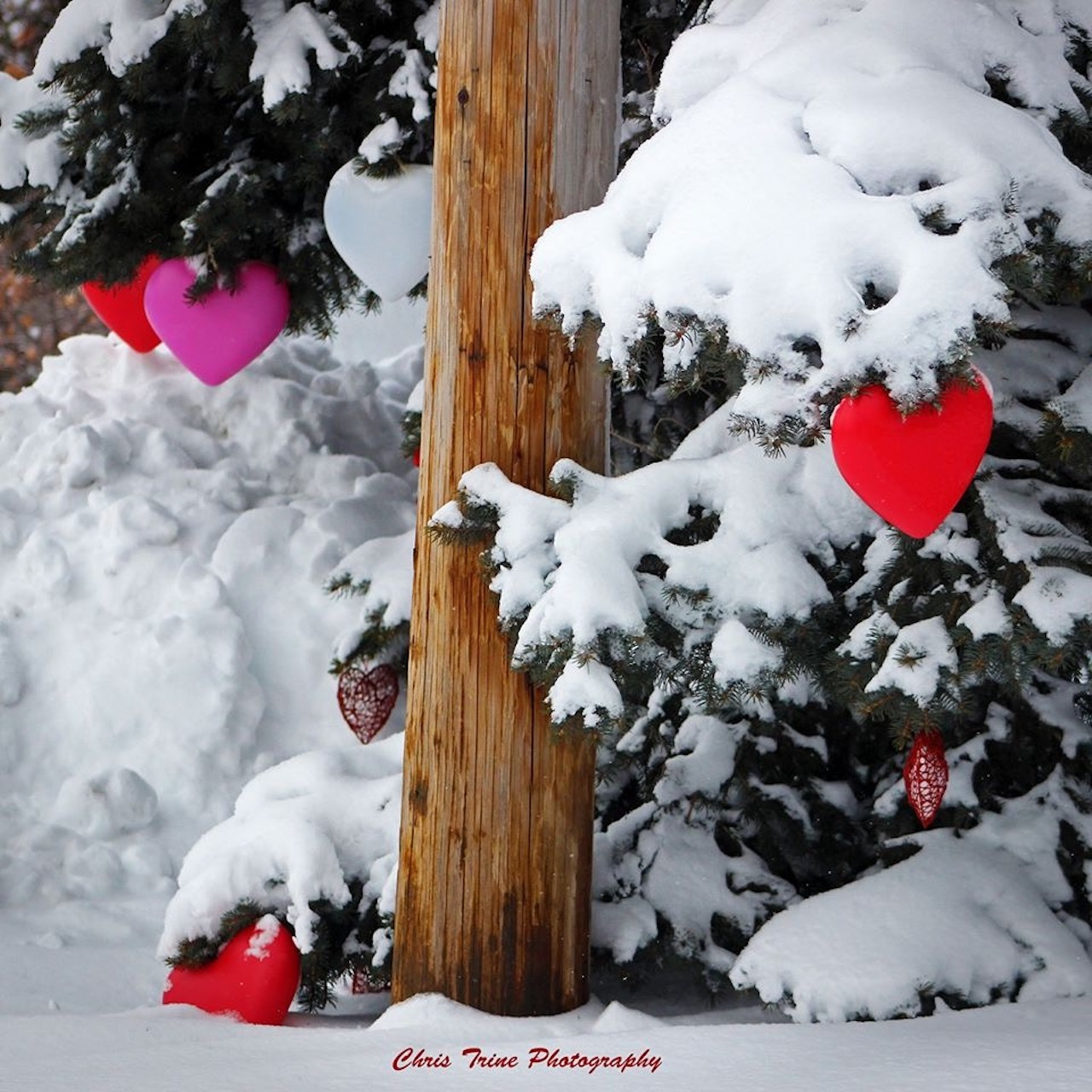 Fresh snow valentine (photo)