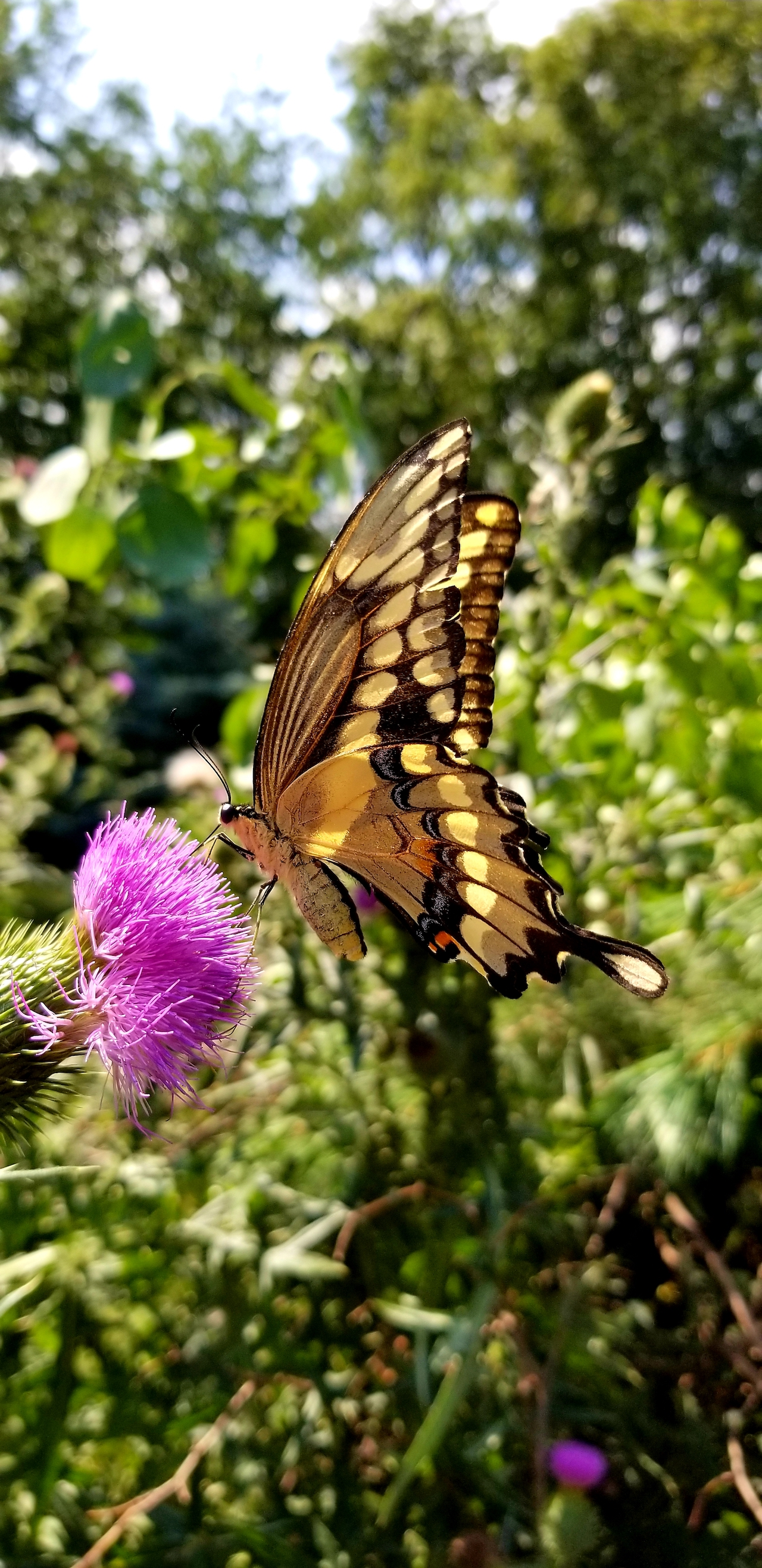 Butterfly in Yates Co. (photo)